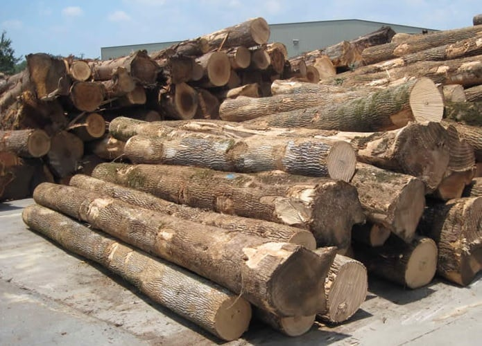 Wooden Logs preapred for making Veneer