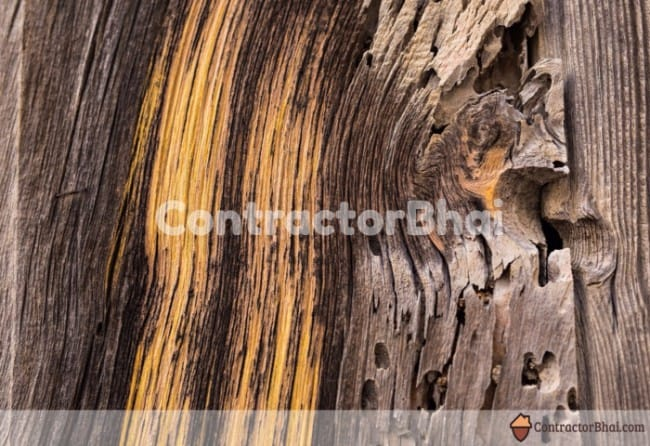 Contractorbhai-Close-up-of-WoodGrains-of-Solid-wood