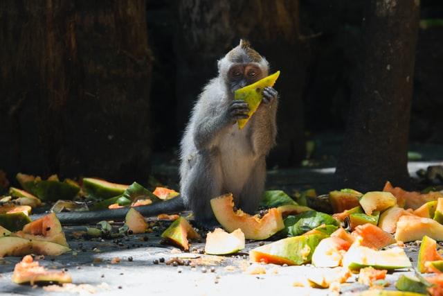 Food Wastage Landfills India Sustainability