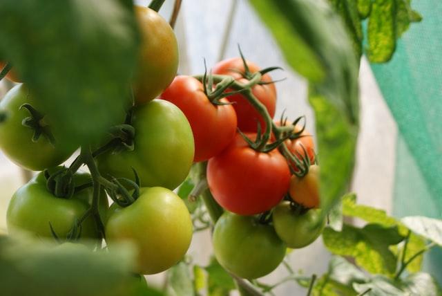 Fruit Vegetables Plantation Climate Change
